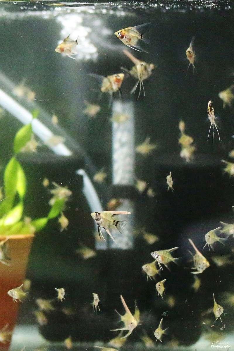 Reproduction Rio Nanays Thumbn14
