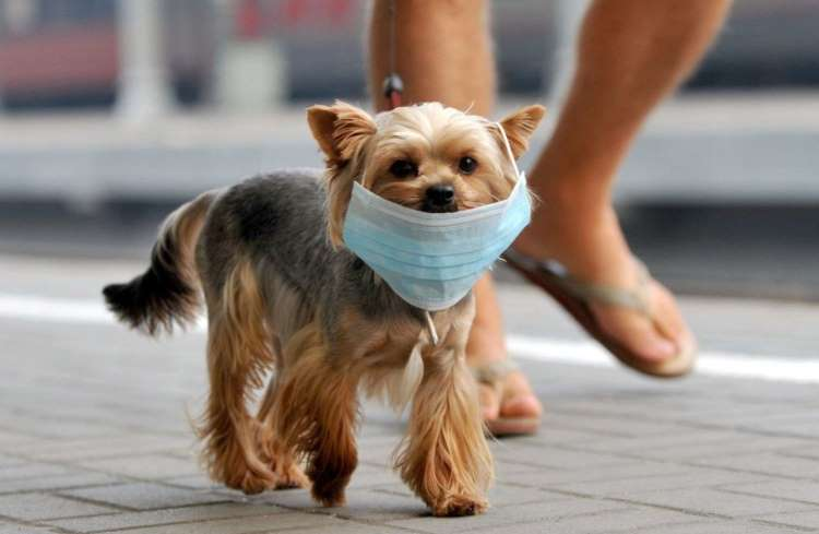 Pet Allergies Bb16lp10
