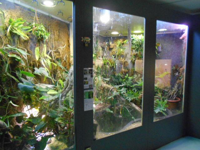musée Tours ( avec un T majuscule ^^ ) : fourmis et reptiles  Dscn7711