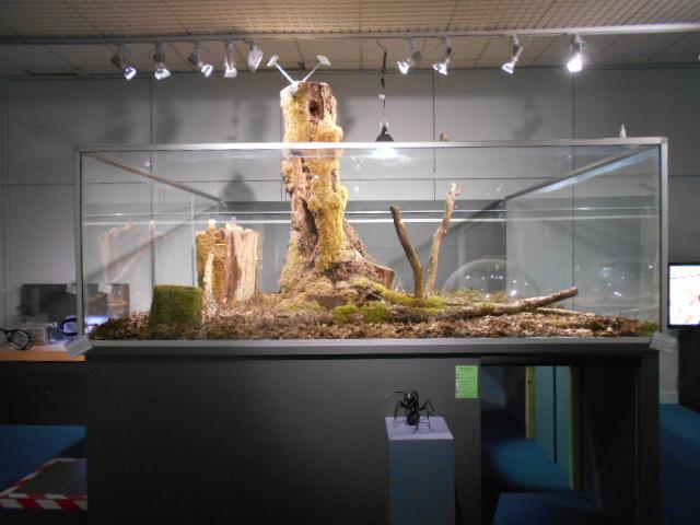 musée Tours ( avec un T majuscule ^^ ) : fourmis et reptiles  Dscn7712