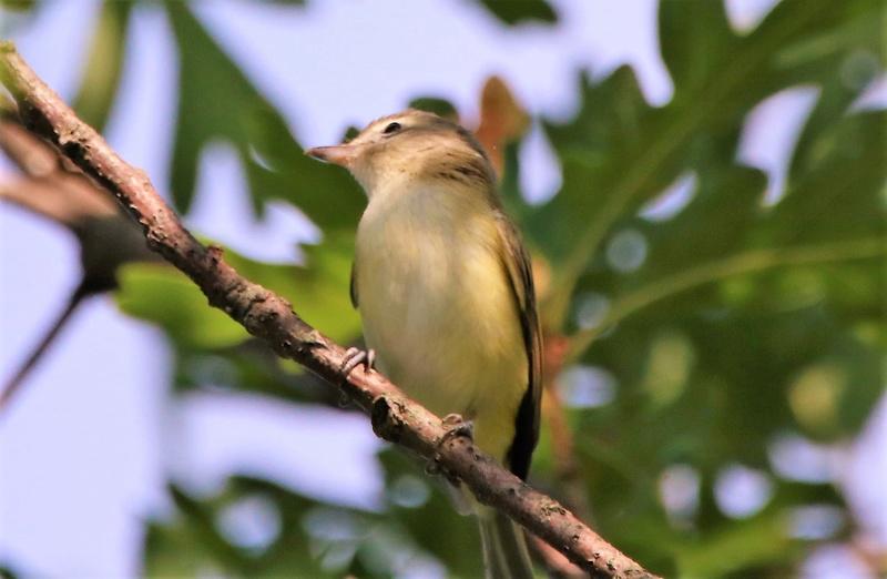 Oiseaux à identifier Img_0410