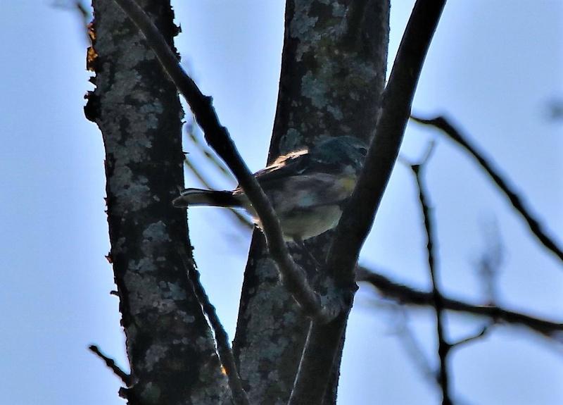 Oiseaux à identifier Img_0411