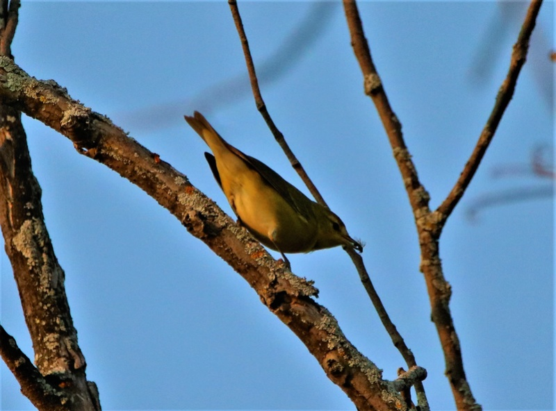 Oiseaux mystères Img_2115