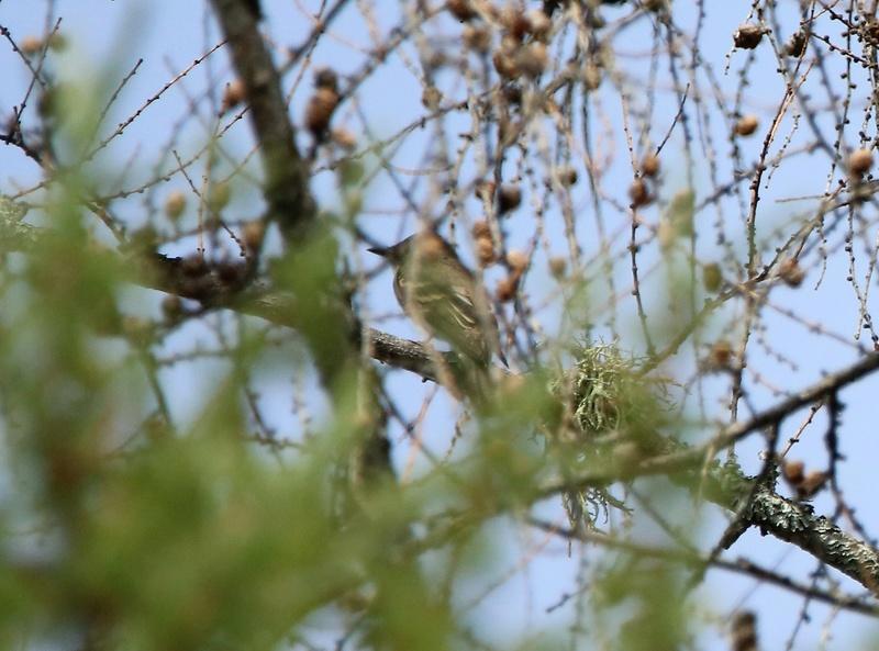 Oiseaux mystères Img_6311