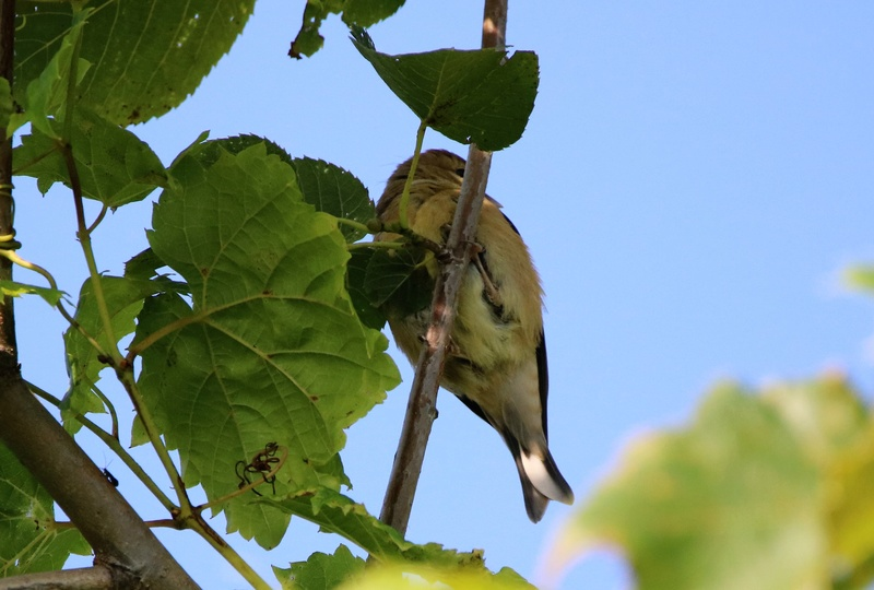 Oiseaux à identifier Img_9511