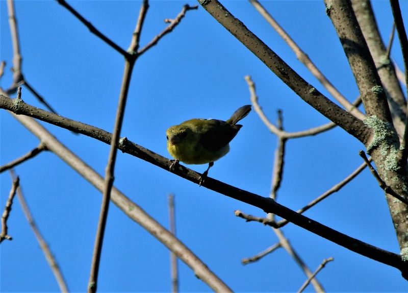 Oiseaux à identifier Img_9611