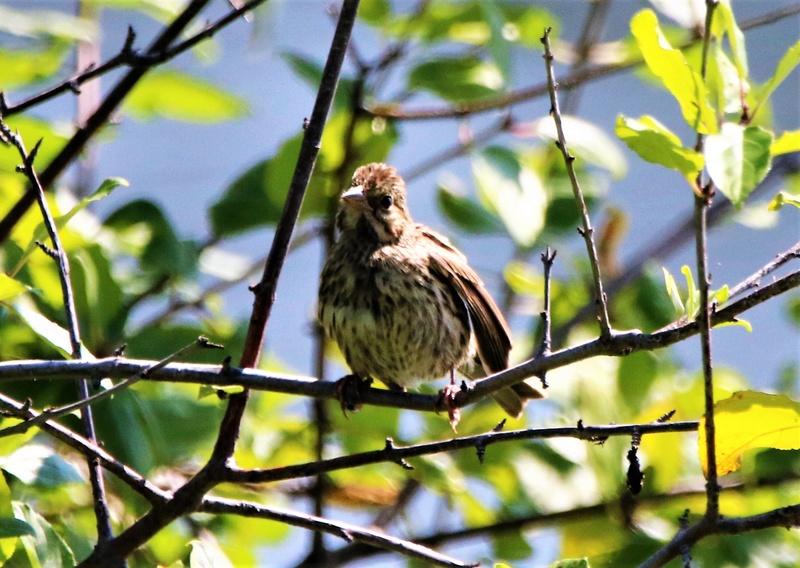 Oiseaux à identifier Img_9910