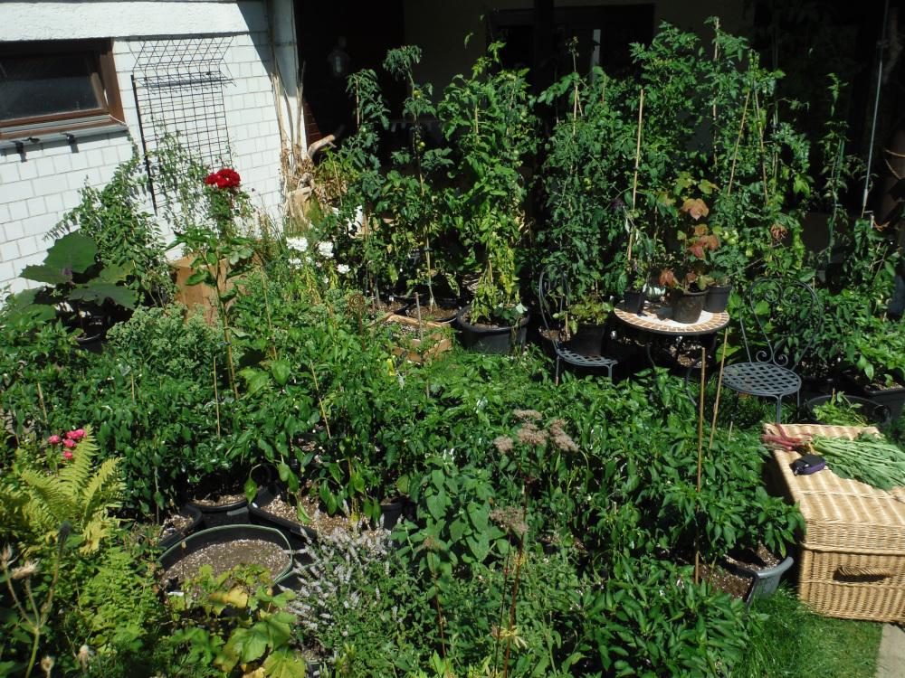 Mein Garten und ich - Seite 2 Dscf3814