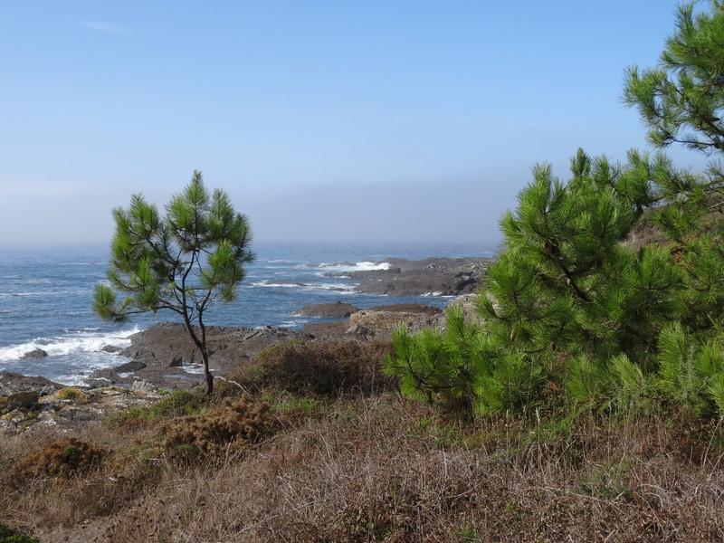 Cabo de Home et praia de Melides Dsc03213