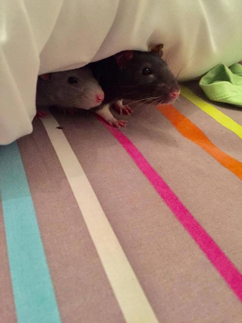 Les petites aventures de Evan & Cheerio Image15