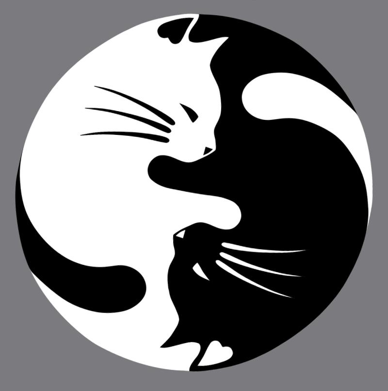 NATO, chaton européen blanc&crème né le 15/05/17 B2eda810