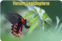 Bourse Exposition Internationale d'Insectes du monde 2017 Badge10