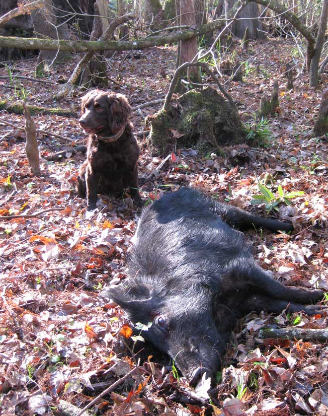I Went Hunting Today Img_0010
