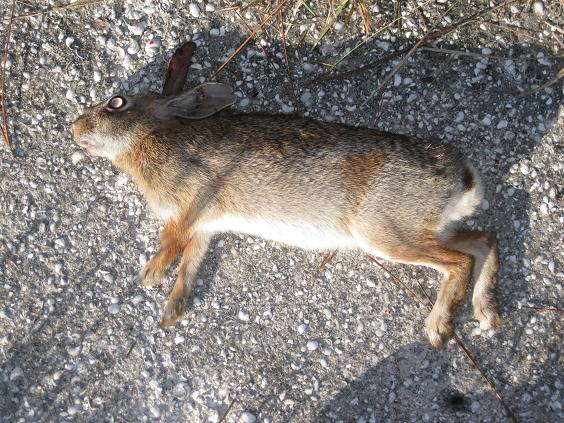 I Went Hunting Today Potts_11