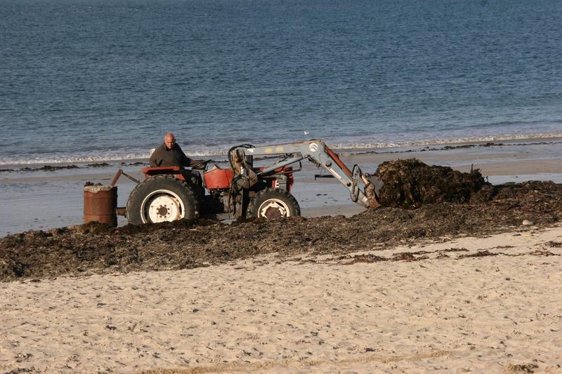 Nettoyage des algues vertes  Img_5212