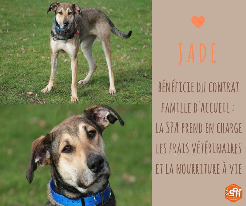 JADE - x levrier/berger   ans - Spa de Chamarande (91) eligible FALD 21314210