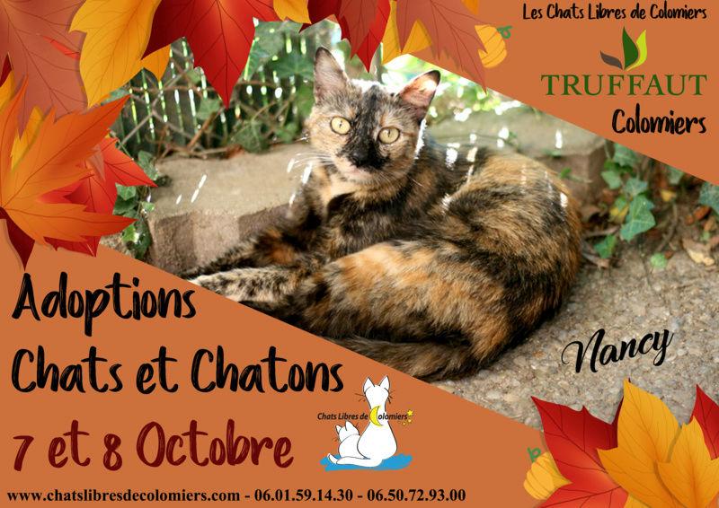Week-end du 7 et 8 Octobre à Truffaut de Colomiers Aff_oc12