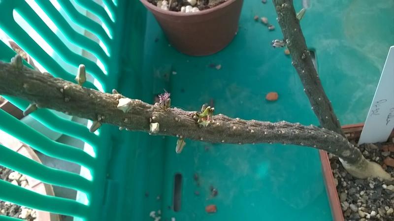 Cactus prod 2017 Wp_20103
