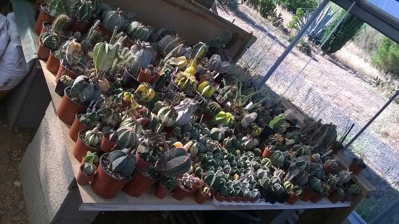 Cactus prod 2017 Wp_20216