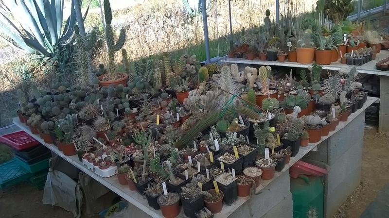 Cactus prod 2017 Wp_20218