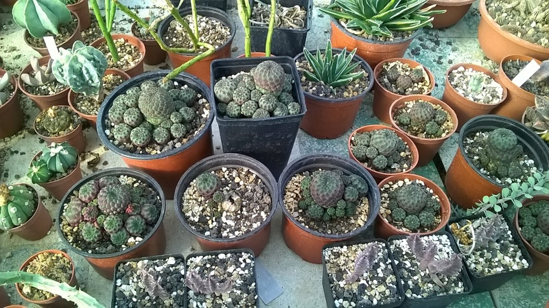 Cactus prod 2017 Wp_20224