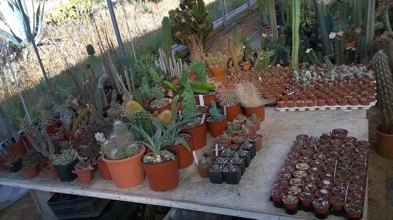 Cactus prod 2017 Wp_20225