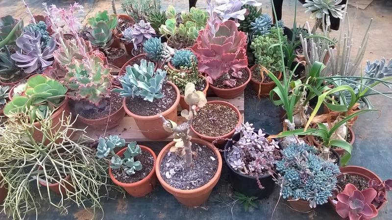 Cactus prod 2017 Wp_20227