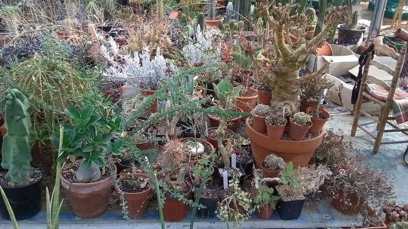 Cactus prod 2017 Wp_20230