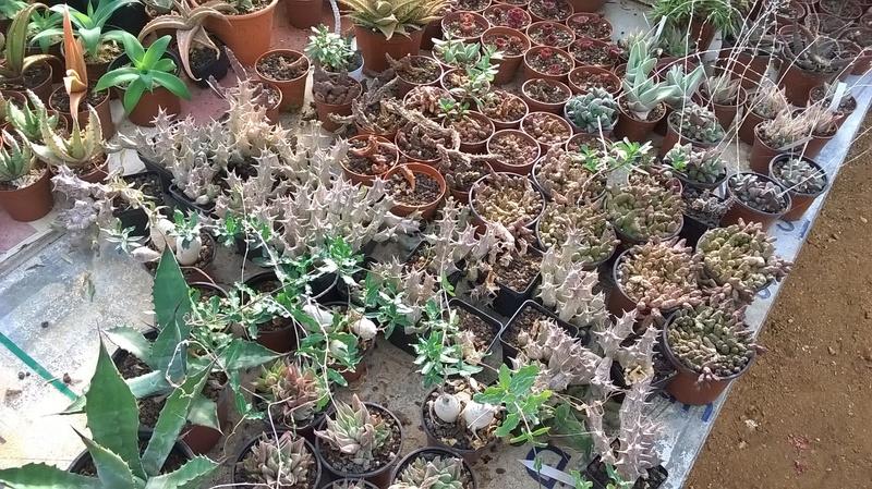 Cactus prod 2017 Wp_20241