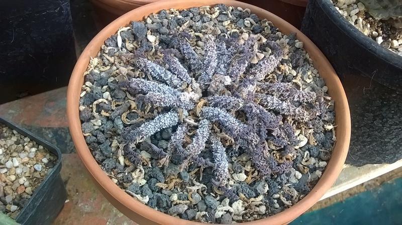 Cactus prod 2017 Wp_20248