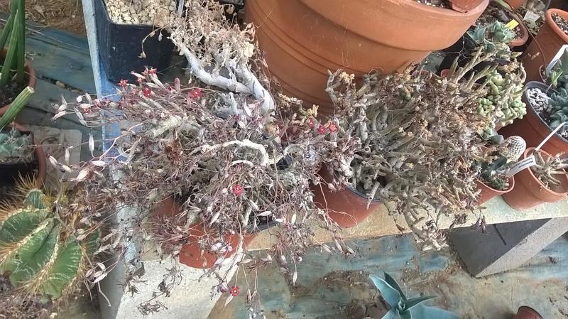 Cactus prod 2017 Wp_20256