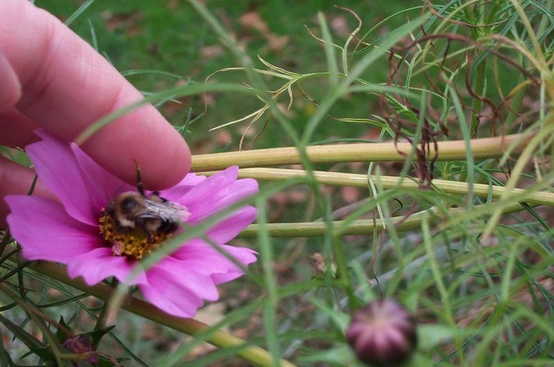 Bee 'Sleeping' in Cucumber Flower Beetic10