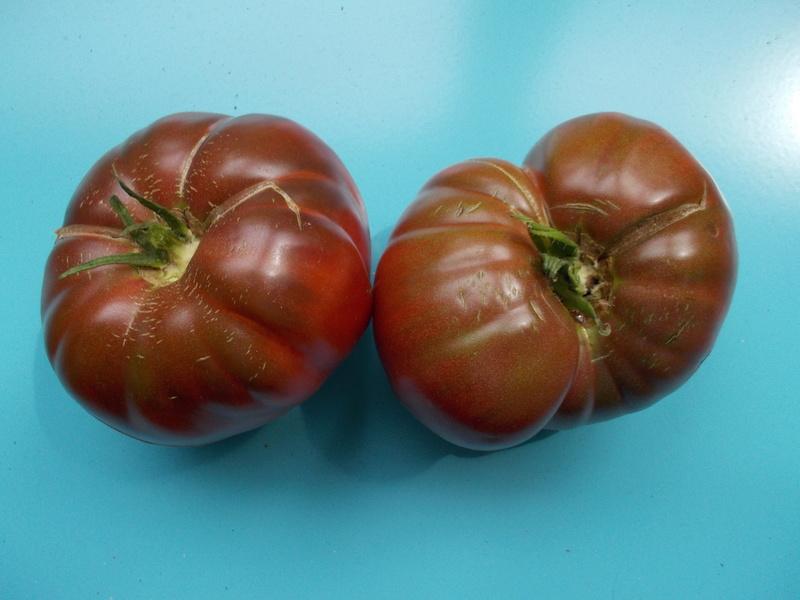 cherokee purple...seed to dish Dscn0744