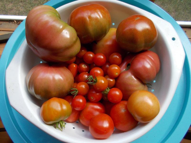 Today's Harvest - Page 2 Dscn0754