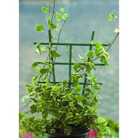 Terrarium pour morelia viridis aru juvénile  - Page 3 Tuteur10