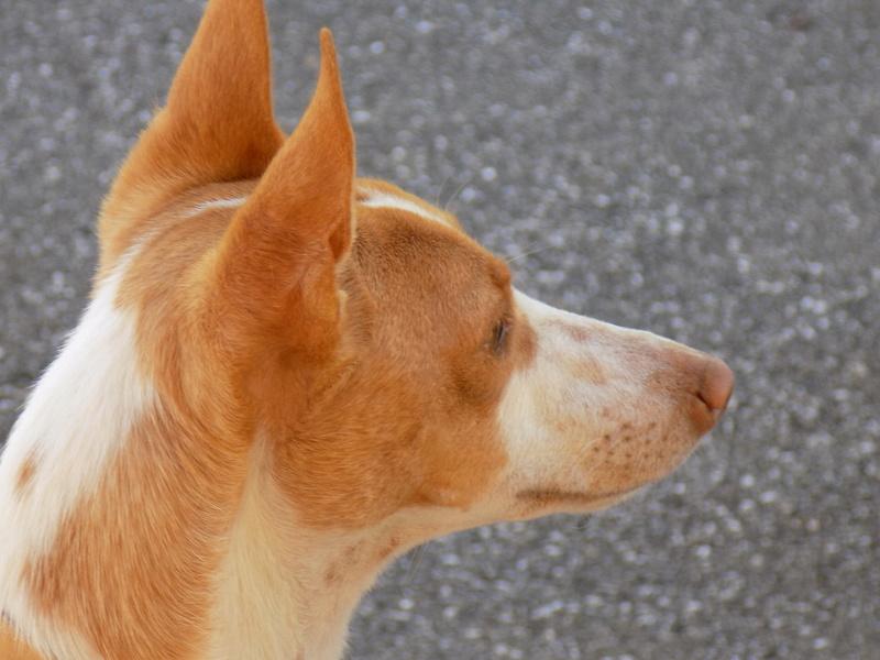 Annicka petite pod tendresse Adoptée  - Page 2 Dscn3714