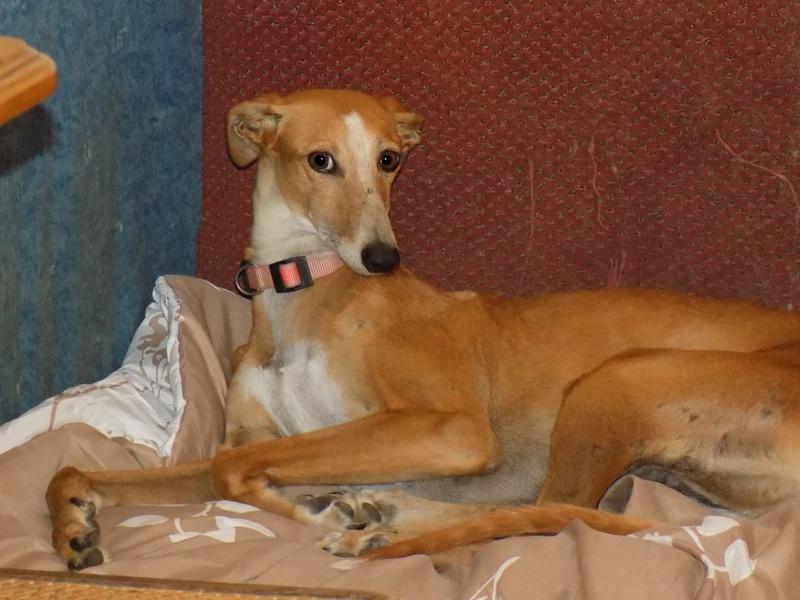 MELLINA petite crevette rousse Scooby France  Adoptée  - Page 2 Dscn3716