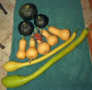 Monthly Avatar: September, Show Off Your Garden Harvest! - Page 4 Img_0211