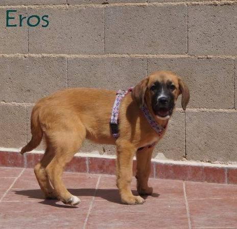 EROS - ES (Sole) 20031810