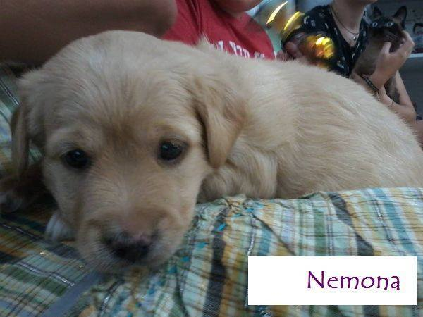 NEMONA - SABLE - ES (Sole) 20525910