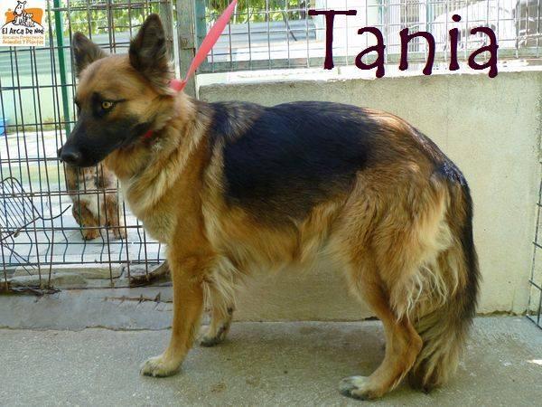 TANIA (devenue Laïka) - BERGER ALLEMAND - ES (Sole) 21193010