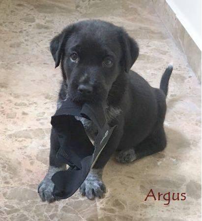 ARGUS (devenu MARCUS) - NOIR - ES (Sole) 21557510