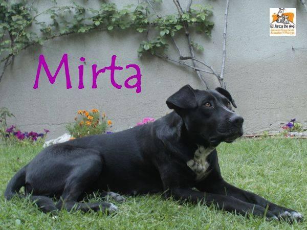 MIRTA - CROISEE LABRADOR NOIRE - ES (Sole) 21761912