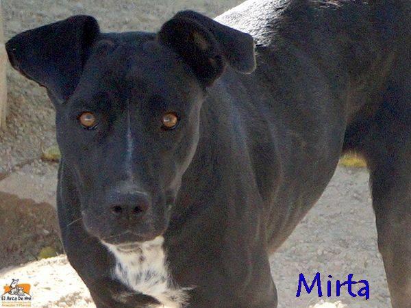 MIRTA - CROISEE LABRADOR NOIRE - ES (Sole) 22154510