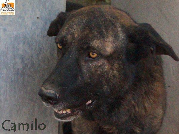 CAMILO - CROISE MATIN ESPAGNOL - EN FA DANS LE 94 22195911