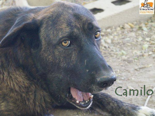 CAMILO - CROISE MATIN ESPAGNOL - EN FA DANS LE 94 22221611