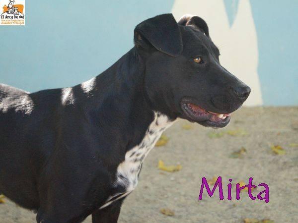 MIRTA - CROISEE LABRADOR NOIRE - ES (Sole) 22228310