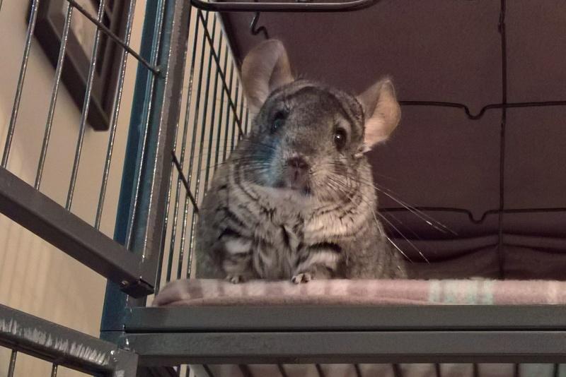 recent pet pics Wp_20131