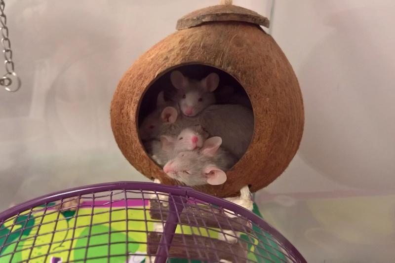 recent mouse pics Wp_20141