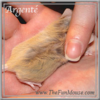 Varieties of Mice Argent12